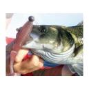 10 paquetes de peixe de goma, degustación SELECCIÓN