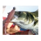 10 pakker med gummi fisk, VALG SMAKER