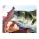 10 verpakkingen van rubber vis, KEUZE PROEVEN